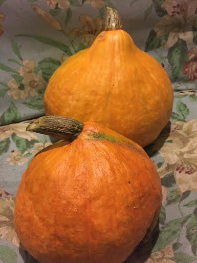 Red Kuri Squash: October 2015